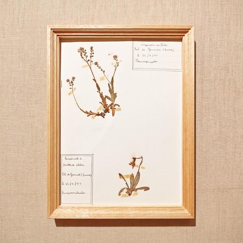 植物標本フレーム 1969 フランスビンテージ 19FEB-VSHF06