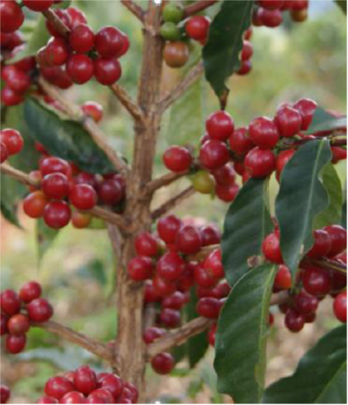 【200g】 ルワンダ カレンゲラ ~rwand karengera coffee washing station~