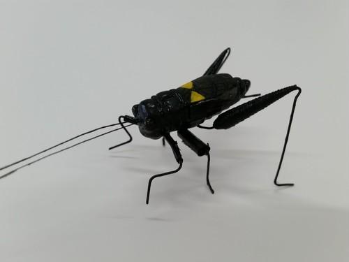 「昆虫模型」コオロギ