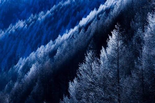 霧氷(美ヶ原高原)
