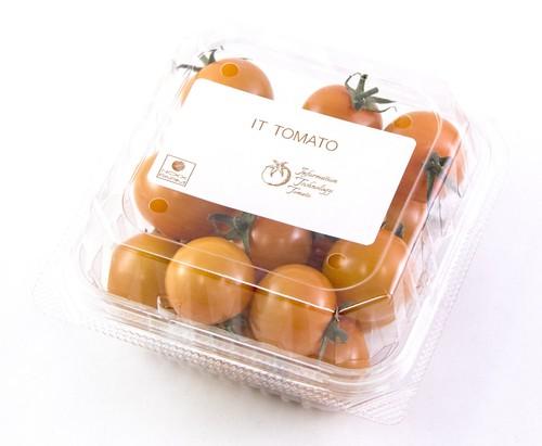 ITトマト【オレンジ千果】