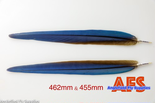 Blue-Gold Macaw Side Tails Matched Pair (BGMSP-1) / マコー サイドテール ペア