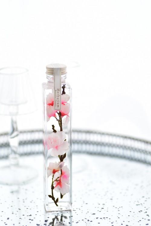 サクラのハーバリウム 角瓶 Lサイズ  ギフト用(化粧箱入ギフト包装)Herbarium SAKURA Flower Gift 外国人 受賞 合格 お祝い 手土産 プレゼント  Present