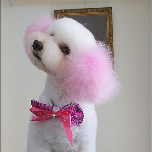 カラーヘアチョーク ピンク