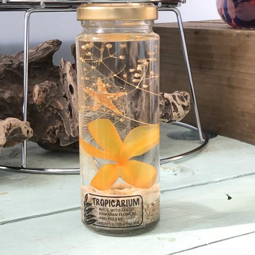 【ハワイアンなハーバリウム】プルメリアのトロピカリウム|イエロー(スリムボトル・プリザーブド)