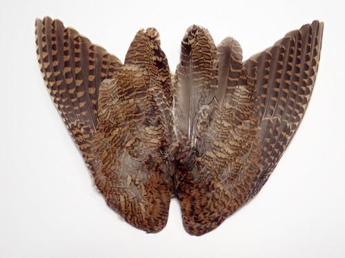 Woodcock Whole Wings 1pair / ウッドコック ウイング ペア