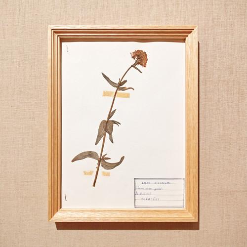 植物標本フレーム 1969 フランスビンテージ 19FEB-VSHF05