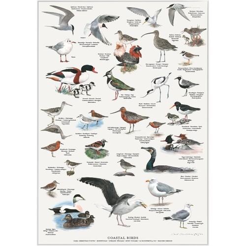 アート ポスター A2 サイズ KOUSTRUP & CO. - Birds from Danish coasts デンマークの海岸の野鳥