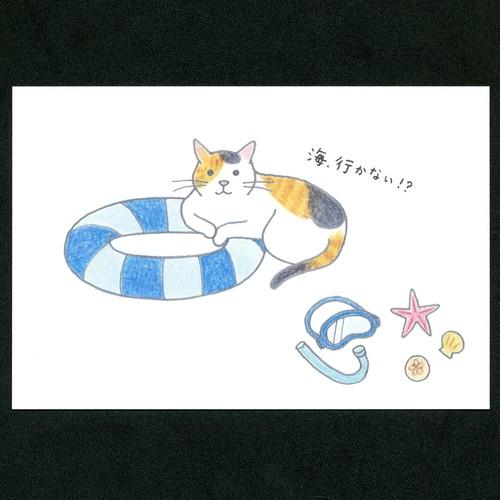 猫ポストカード(四季海へ)