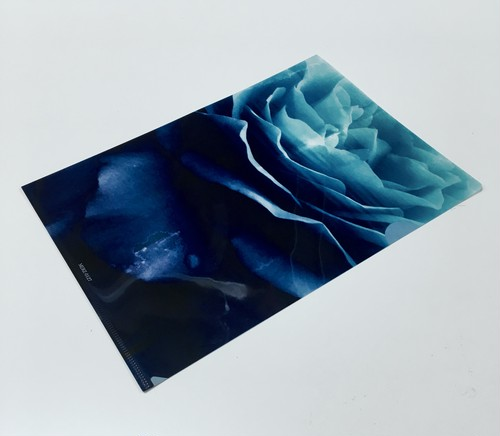 Aofuji Sui×THE NOVEMBERS ROSES Clear file (MERZ-0127)