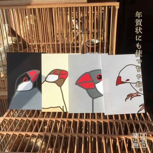 文鳥ポストカード 4羽セット