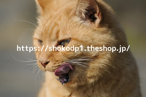 吠える猫_3_dsc3329