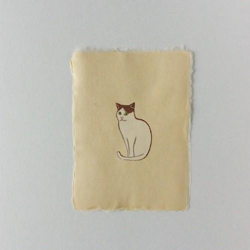 ポストカード ネコ