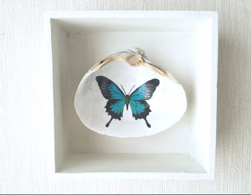青い蝶の標本