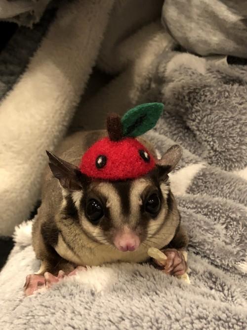 小動物用帽子【りんご】