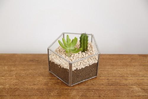 五角形 ガラス テラリウム シルバー