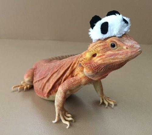 パンダの帽子 M