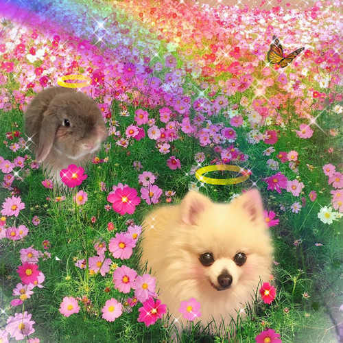 【2頭】デジタル合成フォト「虹の橋・あの子がいる世界」薄手クリアファイル&シール&額縁入りカラーコピーセット