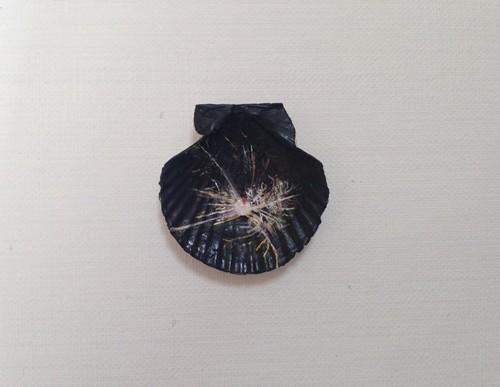 貝殻絵 (線香花火)