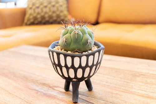 Triple Legs Cactus - 新天地 -