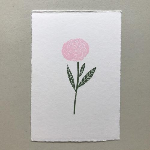 postcard (peony)