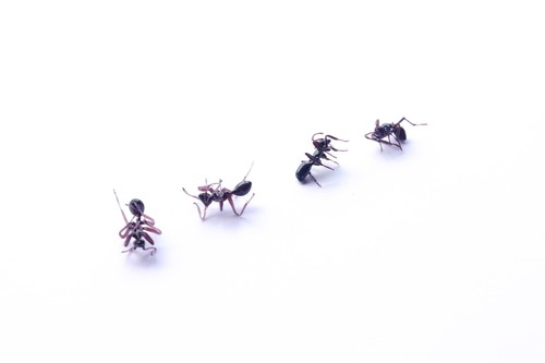 アリ 死んでいるタイプ