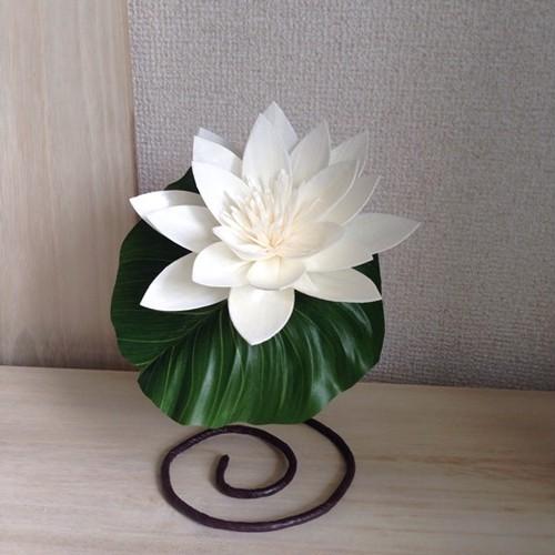 Lotus&Leaf (BOX入)