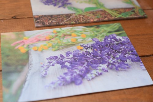 くさばなレター*ガーデンフラワー秋の花