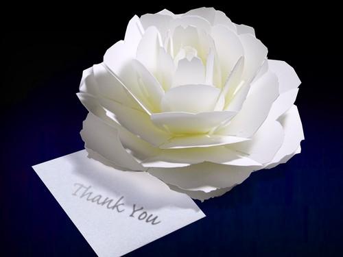 咲くようにひらく 花のサンキューカード〈ローズ〉