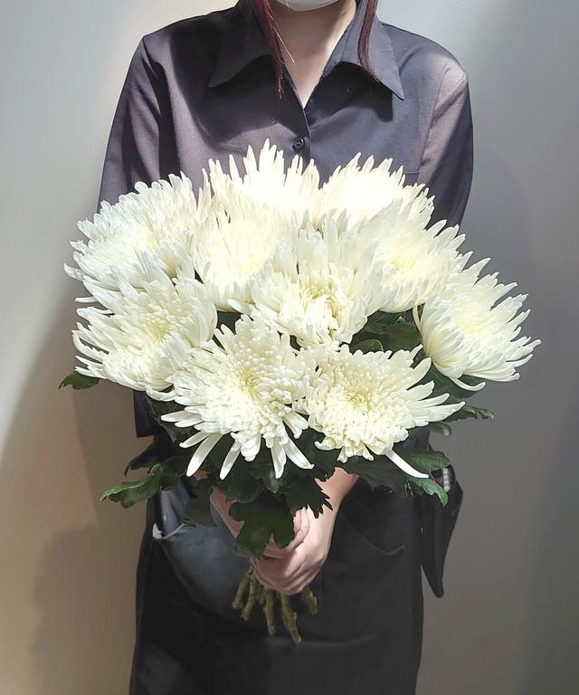 9月9日は『重陽の節句』長寿を願って 菊を飾ろう。 アナスタシアホワイト 送料無料