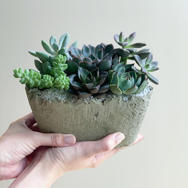河合孝徳さん 多肉植物寄せ植えアソート(セメント陶器付き)グリーン