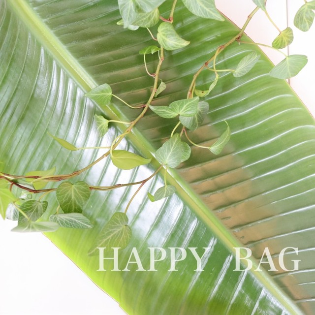 春の「HAPPY BAG」