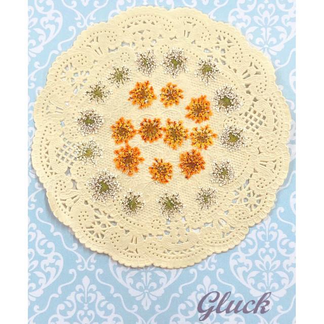 コンパクト押し花 レースフラワー(ホワイト&オレンジ) 少量をパックにしてお届け! 押し花素材