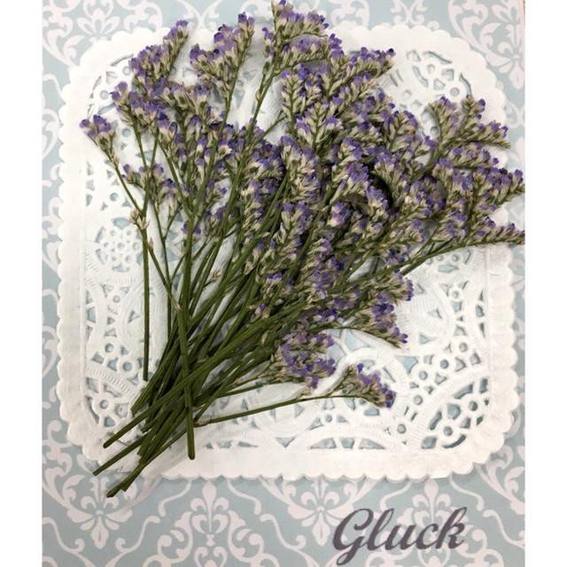 コンパクト押し花 ハイブリットスターチス(パープル) 少量をパックにしてお届け! 押し花素材