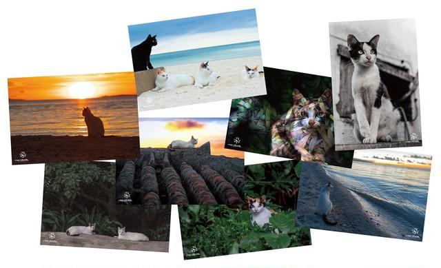琉球島猫百景ポストカード8枚セット