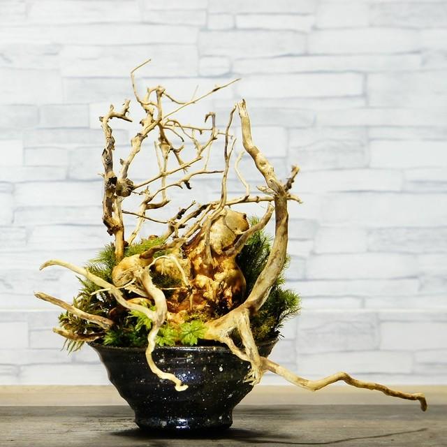 高さ 25cm 信楽焼 苔テラリウム 完成品 プレゼントにもおすすめ 現物 苔盆景 テラリウム 流木 開店祝い 新築祝い