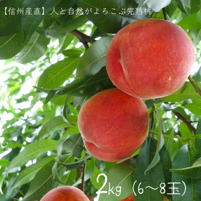 (9月1日頃発送開始)人と自然がよろこぶ完熟桃(だて白桃)(2kg×6〜8玉)