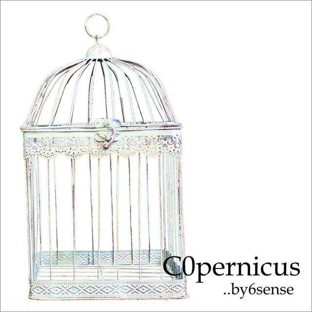 Birdgage バードゲージ・鳥かご Lサイズ 浜松雑貨屋 C0pernicus03