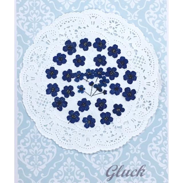 コンパクト押し花 こでまり(ロイヤルブルー) 少量をパックにしてお届け! 押し花素材