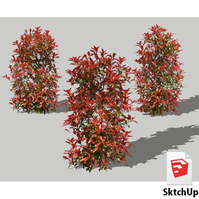 樹木SketchUp 4t_010 - メイン画像