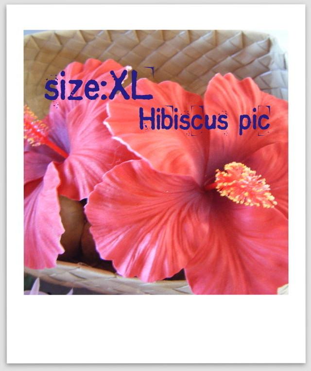 ハイビスカス ヘアピック:Size XL