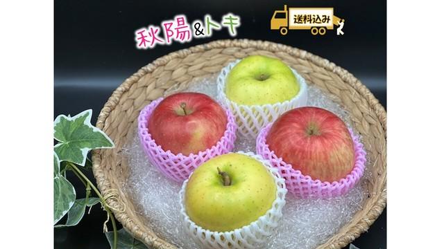 【限定2名様】りんご 2種食べ比べ 各5玉