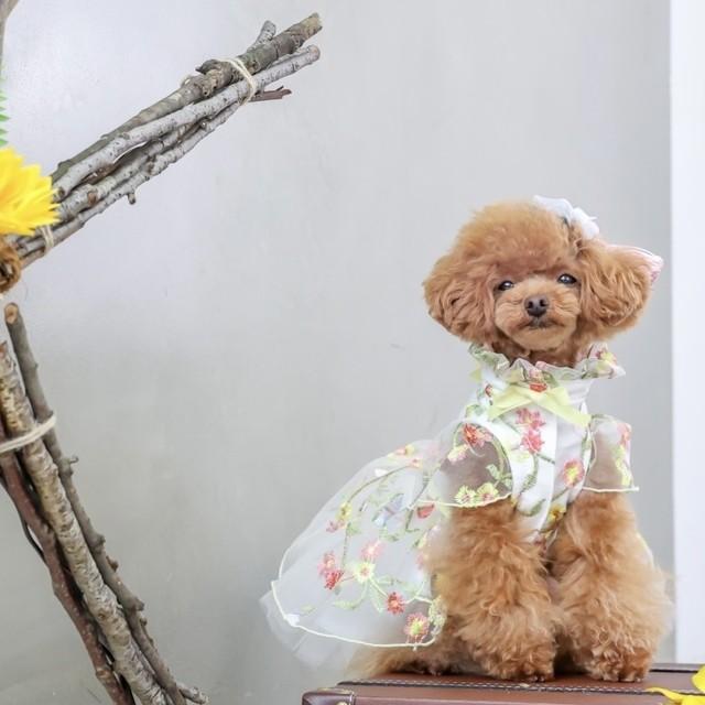 3泊4日レンタル商品:FLOWER  色とりどりの刺繍のドレス