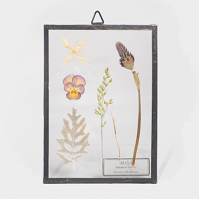 Botanical Frame S001(A_Black)