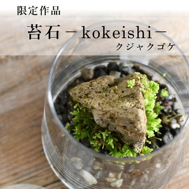 着生苔石 クジャクゴケ【苔テラリウム・現物限定販売】12.12#6