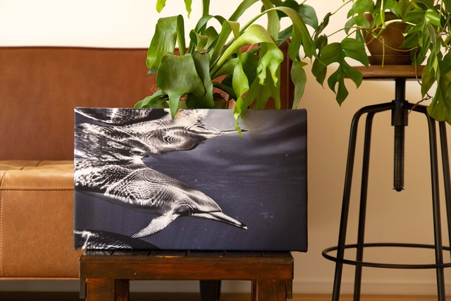【GOODS IN STOCK 20%OFF】Reflection dolphin × Canvas panel
