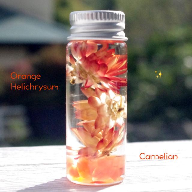 【Petit Vol.2】パワーストーンハーバリウム *生命の輝き♪オレンジカーネリアンとヘリクリサム*