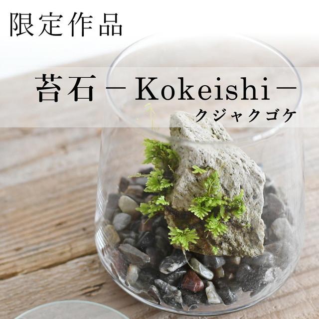 【現物販売】着生苔石クジャクゴケ 20.07.12#5◆栽培容器付