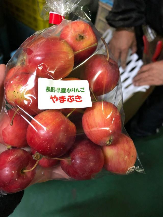 """【ベジバルーン購入者のみ追加購入注文】生産者はたった一人!極レア品種 """"やまぶきりんご"""""""
