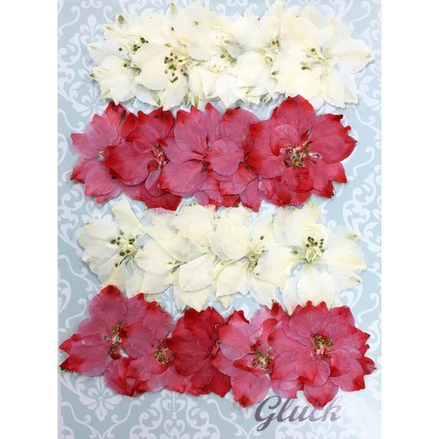 コンパクト押し花 千鳥草(スカーレットピンク&アイボリー)約20枚  少量をパックにしてお届け! 押し花素材